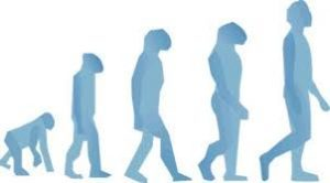 Biological evolution graphic