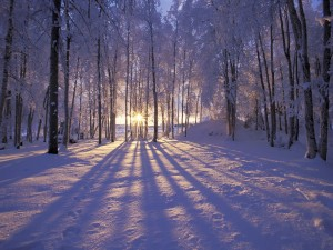 Winter Solstice forest scene